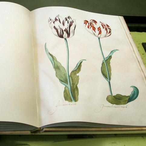 replica het Tulpenboek